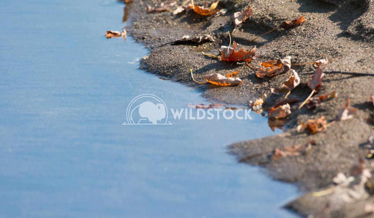 Fallen Leaves on a Sandy River Shore Justin Dutcher Nashwaak River