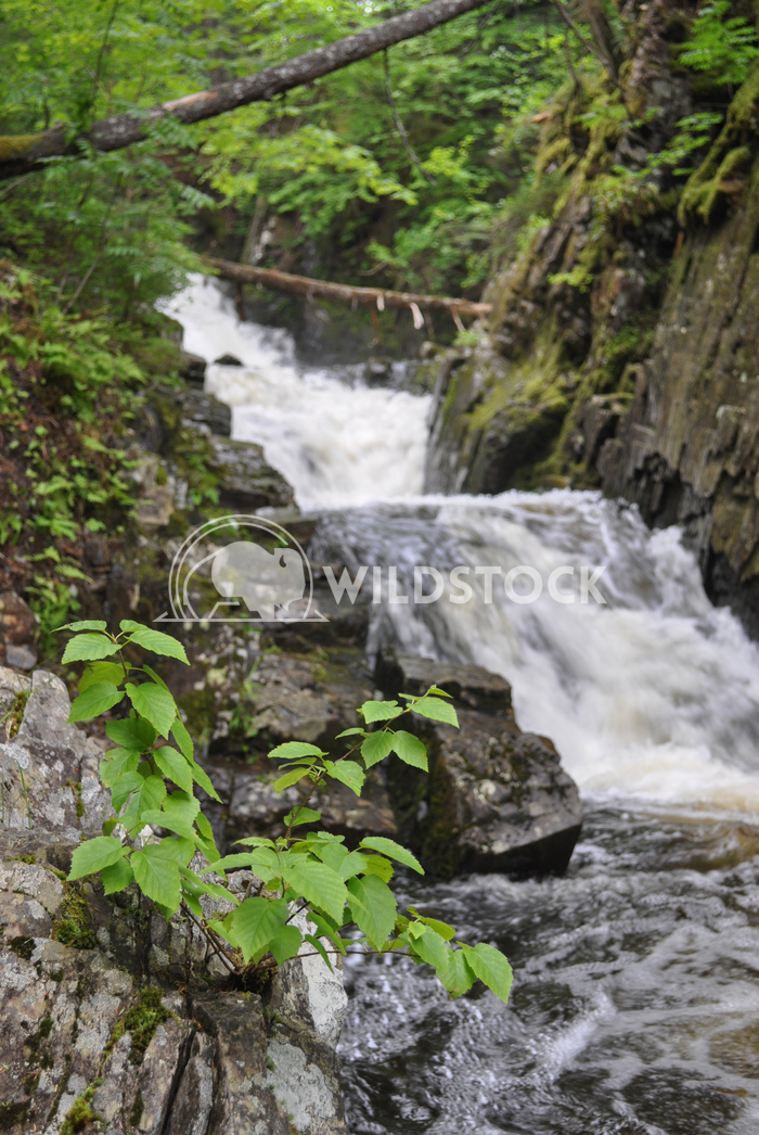 Waterfall in the Forest. Plant in Foreground. Justin Dutcher