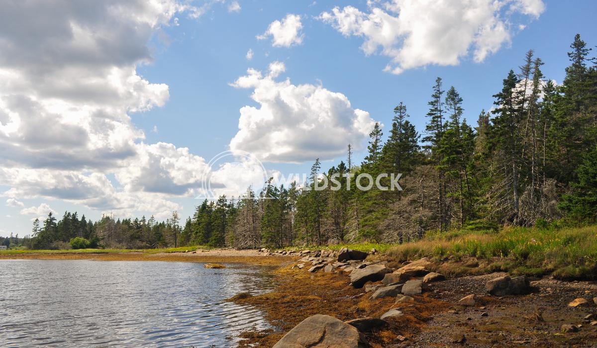 Tree Shoreline Along Ocean - Liscomb Island Justin Dutcher Liscomb Island.
