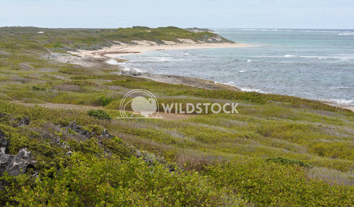Barbuda Coast Beach and Field of Vegetation Justin Dutcher