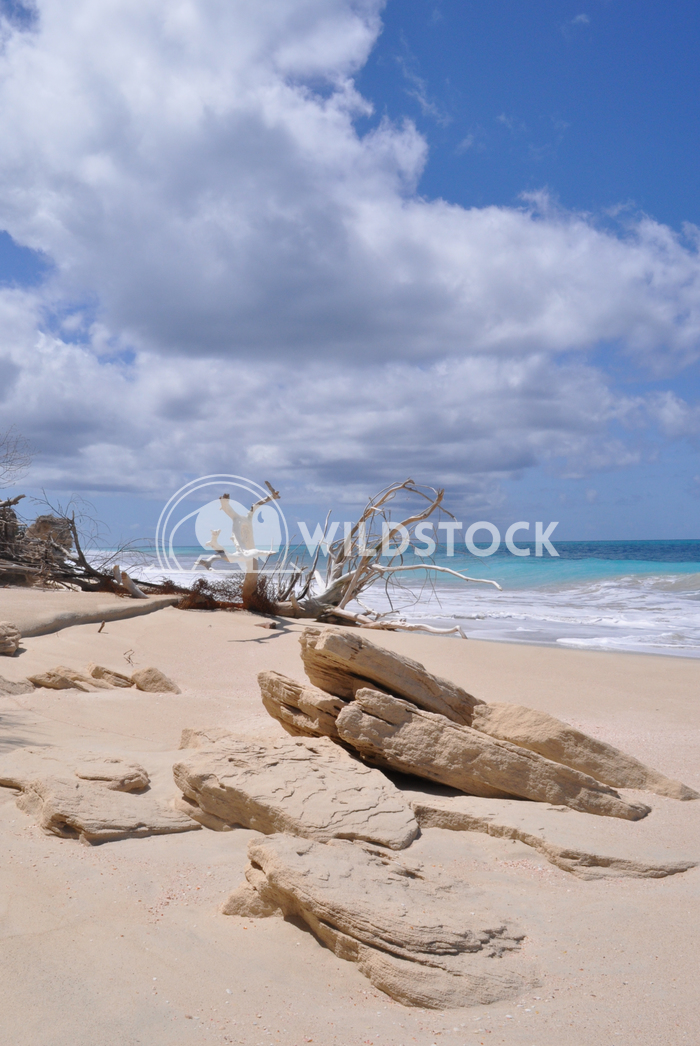 Sandstone Formation on Beautiful Barbuda Beach Justin Dutcher