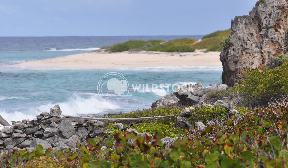 Rock Formation along Beach in Barbuda Justin Dutcher