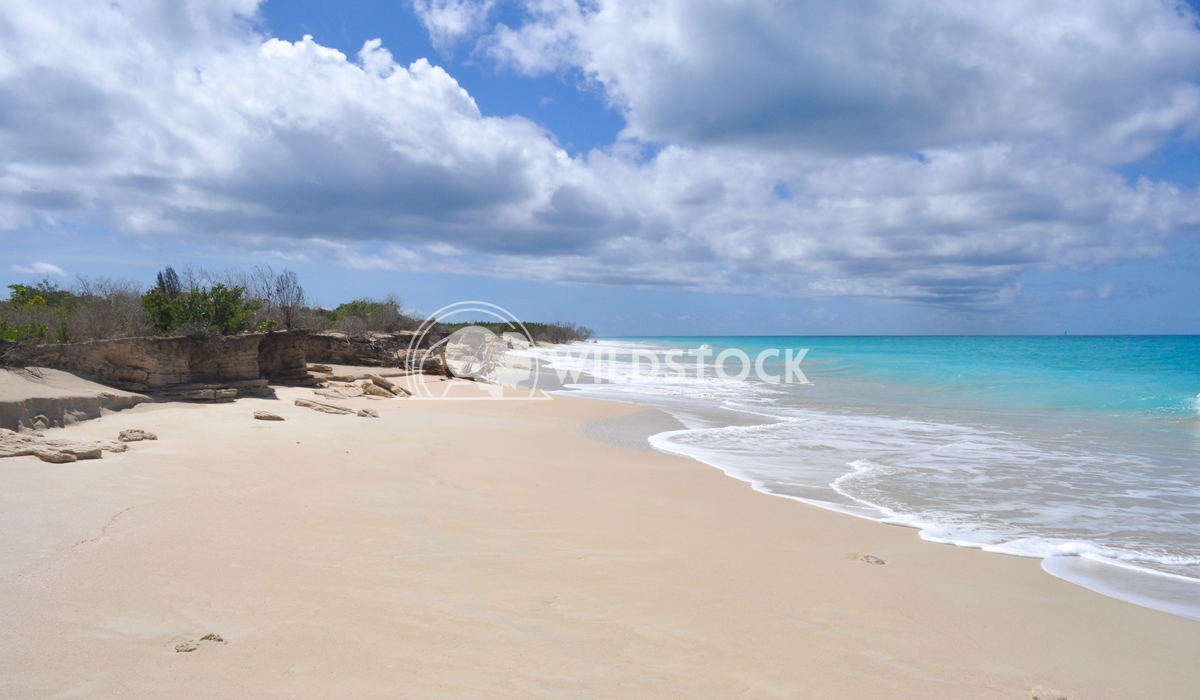 Pristine, Sandy Beach & Clear Blue Water on Barbuda Island Justin Dutcher