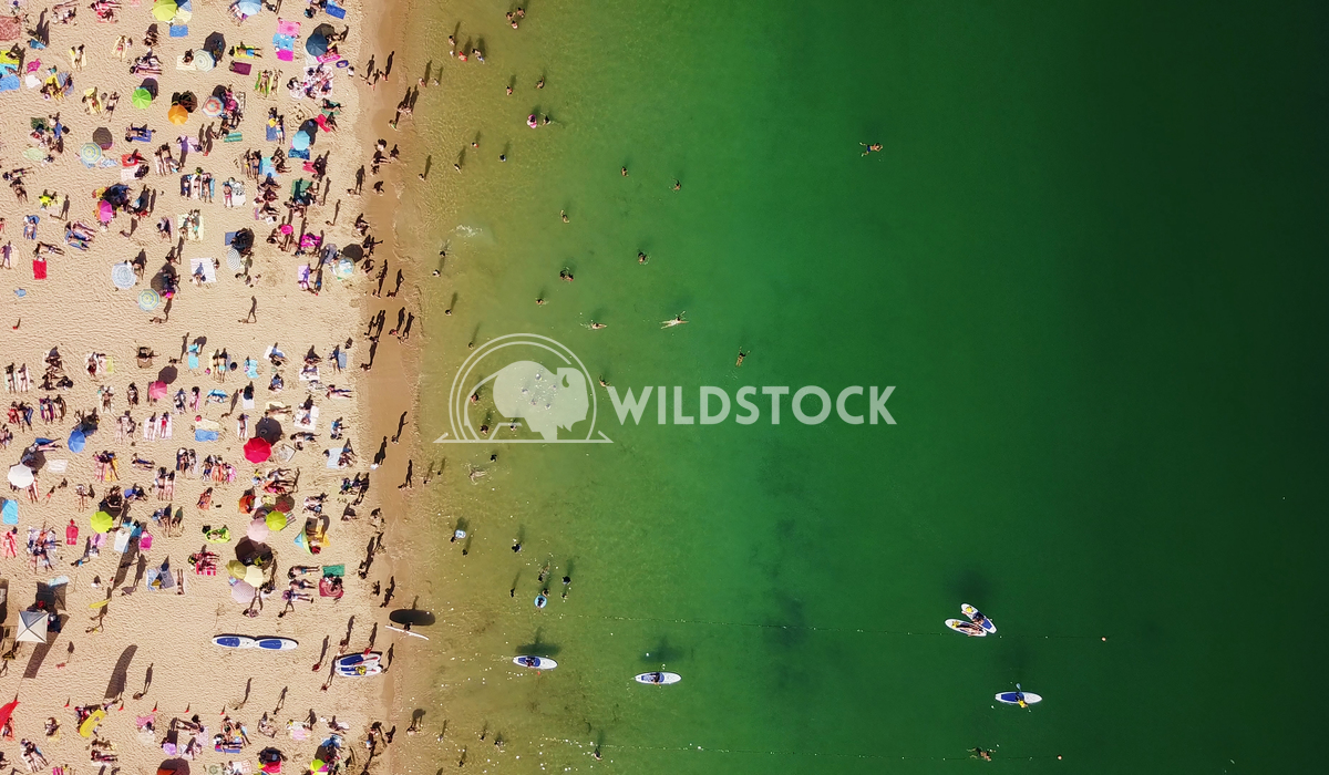 Aerial View From Flying Drone Of People Crowd Relaxing On Beach In Portugal Radu Bercan Aerial View From Flying Drone Of