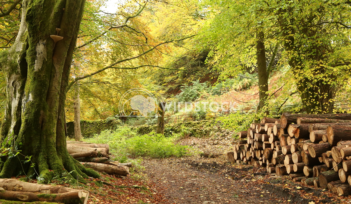 Woodland in the Lake District Jane Hewitt Woodland in the Lake District in Autumn