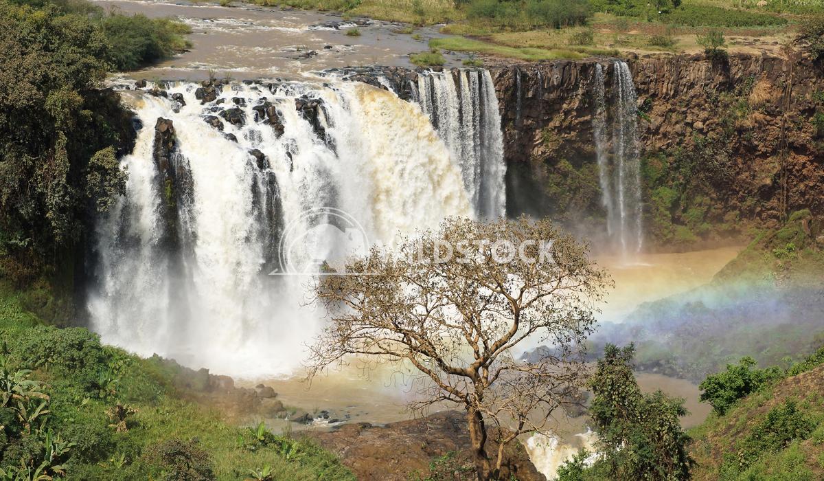 Blue Nile falls, Bahar Dar, Ethiopia 6 Alexander Ludwig Blue Nile waterfalls, Bahar Dar, Ethiopia, Africa