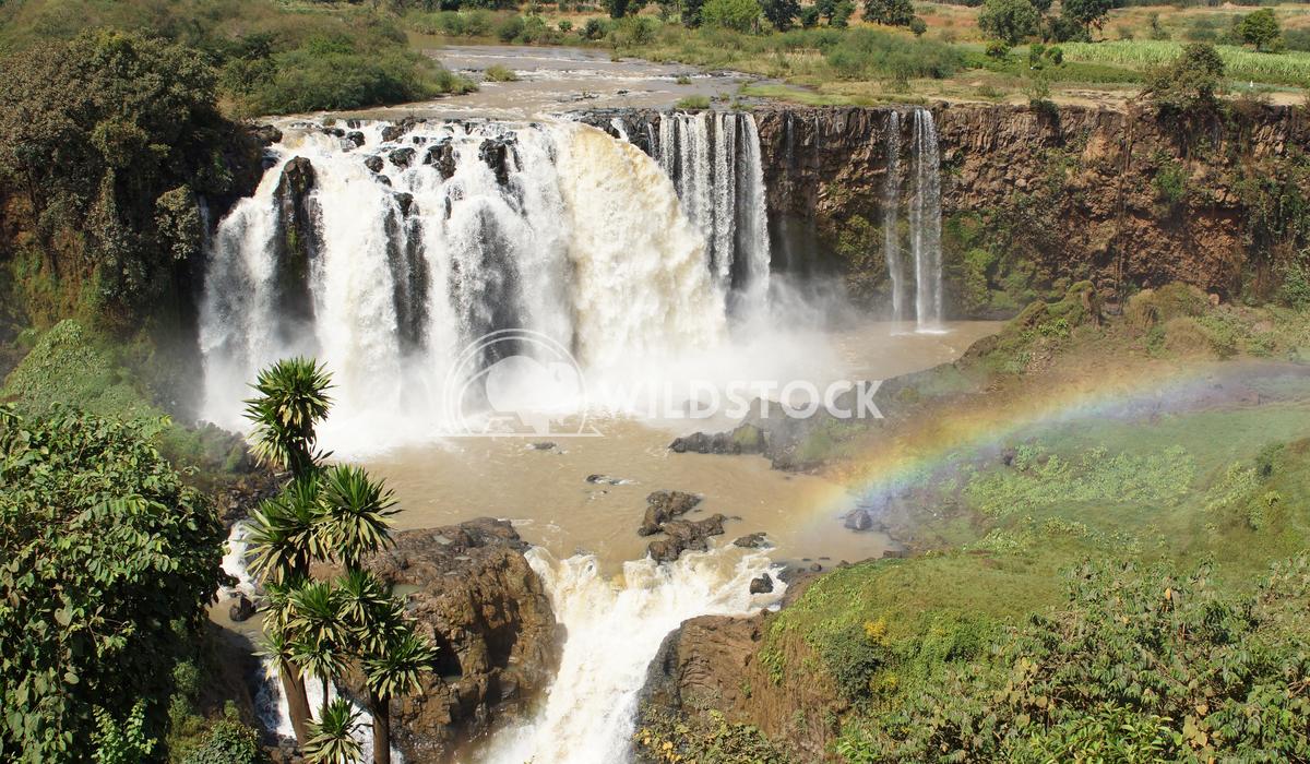 Blue Nile falls, Bahar Dar, Ethiopia 7 Alexander Ludwig Blue Nile waterfalls, Bahar Dar, Ethiopia, Africa