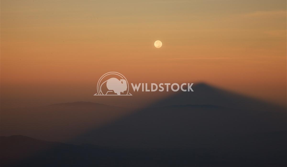 Good Moon Rising Henry McCluster