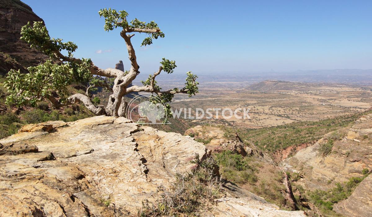 Landscape, Tigray, Ethiopia, Africa 8 Alexander Ludwig Landscape in Tigray province close to Adigrat, Ethiopia, Africa