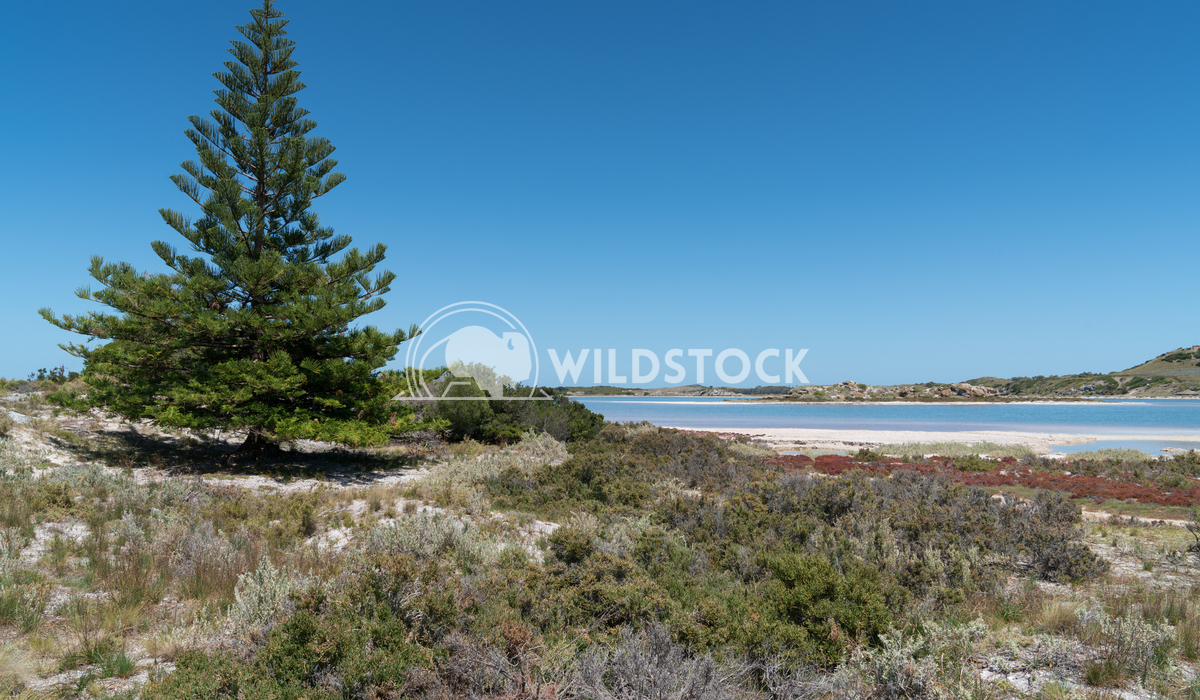 Salt lakes, Rottnest Island, Western Australia 1 Alexander Ludwig Landscape around the salt lakes of Rottnest Island, We
