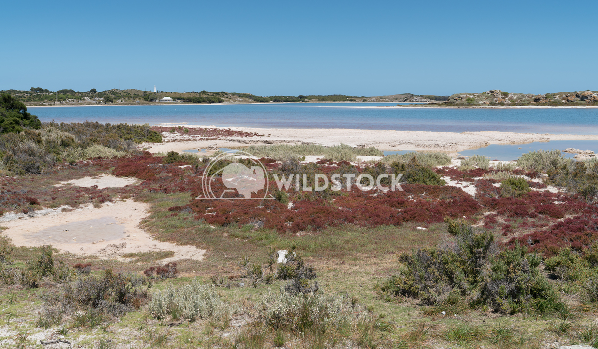Salt lakes, Rottnest Island, Western Australia 2 Alexander Ludwig Landscape around the salt lakes of Rottnest Island, We