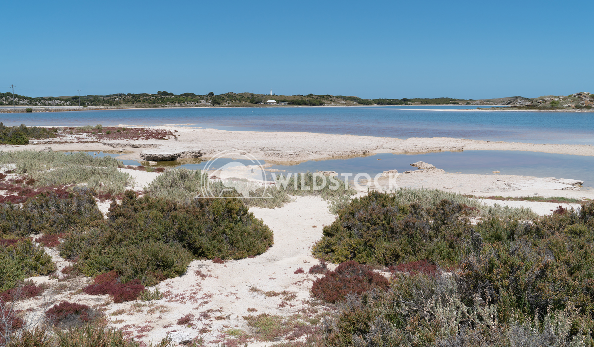 Salt lakes, Rottnest Island, Western Australia 3 Alexander Ludwig Landscape around the salt lakes of Rottnest Island, We