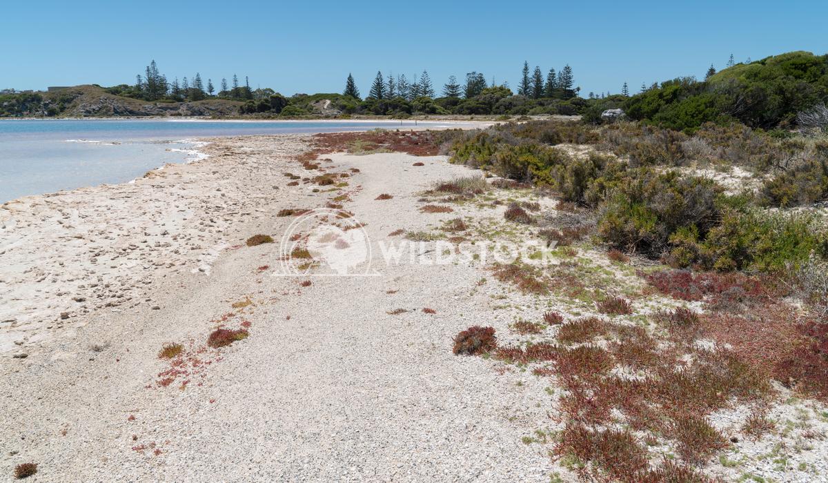 Salt lakes, Rottnest Island, Western Australia 6 Alexander Ludwig Landscape around the salt lakes of Rottnest Island, We