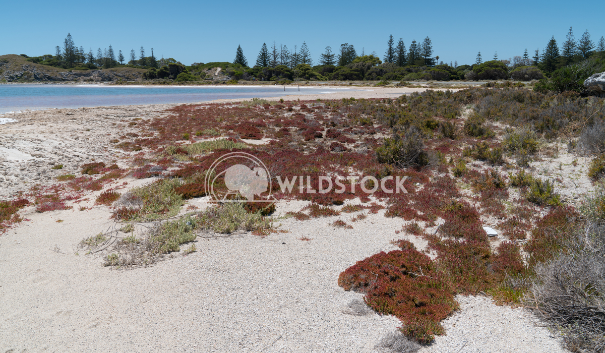 Salt lakes, Rottnest Island, Western Australia 7 Alexander Ludwig Landscape around the salt lakes of Rottnest Island, We