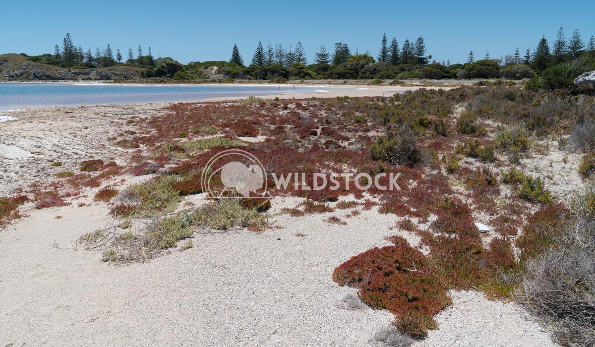 Salt lakes, Rottnest Island, Western Australia 7 Alexander Ludwig Landscape around the salt lakes of Rottnest Island, We