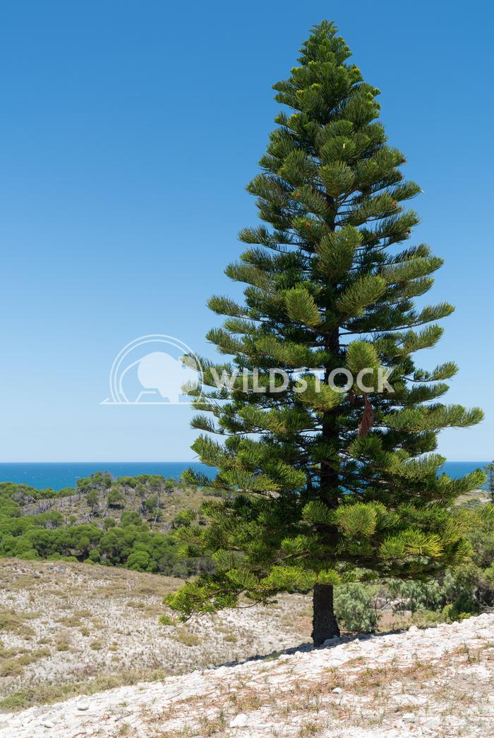 Landscape of Rottnest Island, Western Australia 2 Alexander Ludwig Landscape of Rottnest Island, Western Australia