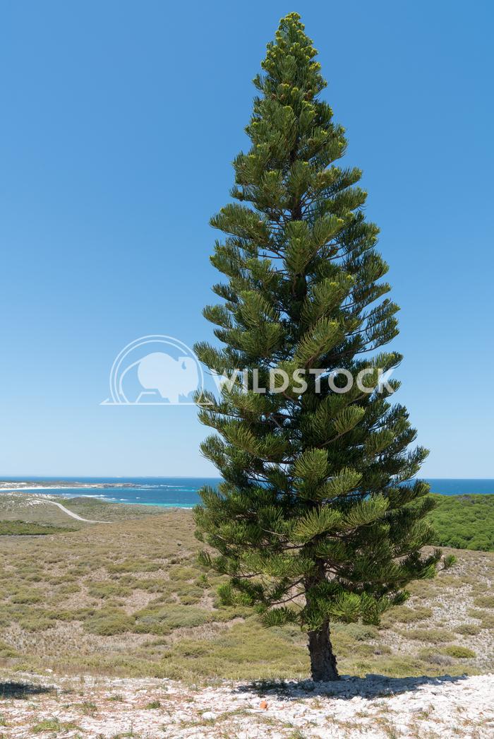 Landscape of Rottnest Island, Western Australia 3 Alexander Ludwig Landscape of Rottnest Island, Western Australia