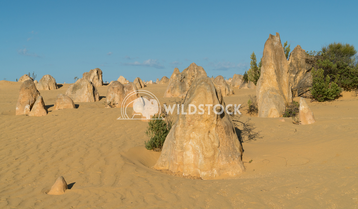 Nambung National Park, Western Australia 11 Alexander Ludwig Pinnacles Desert in early morning light, Nambung National P