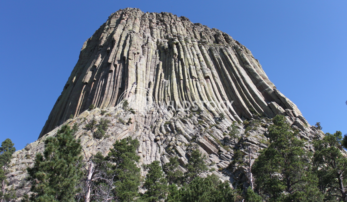 Devil's Tower Damon Yeh