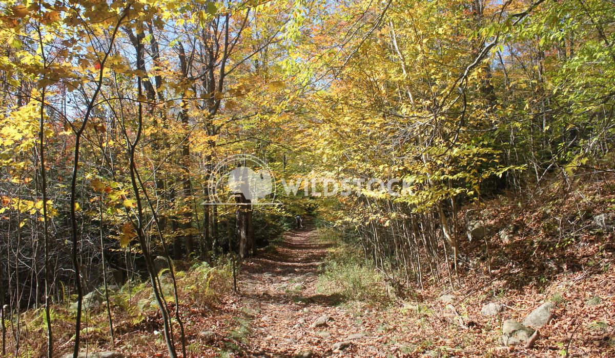 Autumn Trail Damon Yeh
