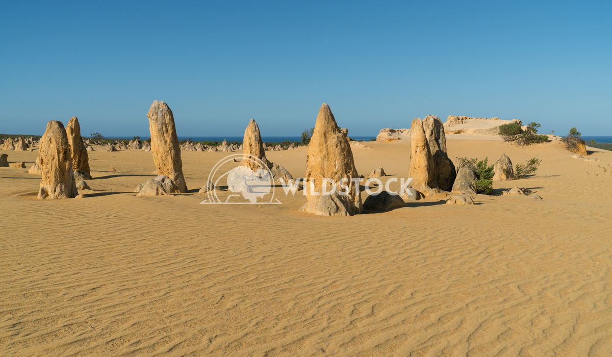 Nambung National Park, Western Australia 17 Alexander Ludwig Pinnacles Desert in early morning light, Nambung National P