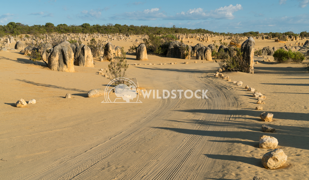 Nambung National Park, Western Australia 18 Alexander Ludwig Pinnacles Desert in early morning light, Nambung National P