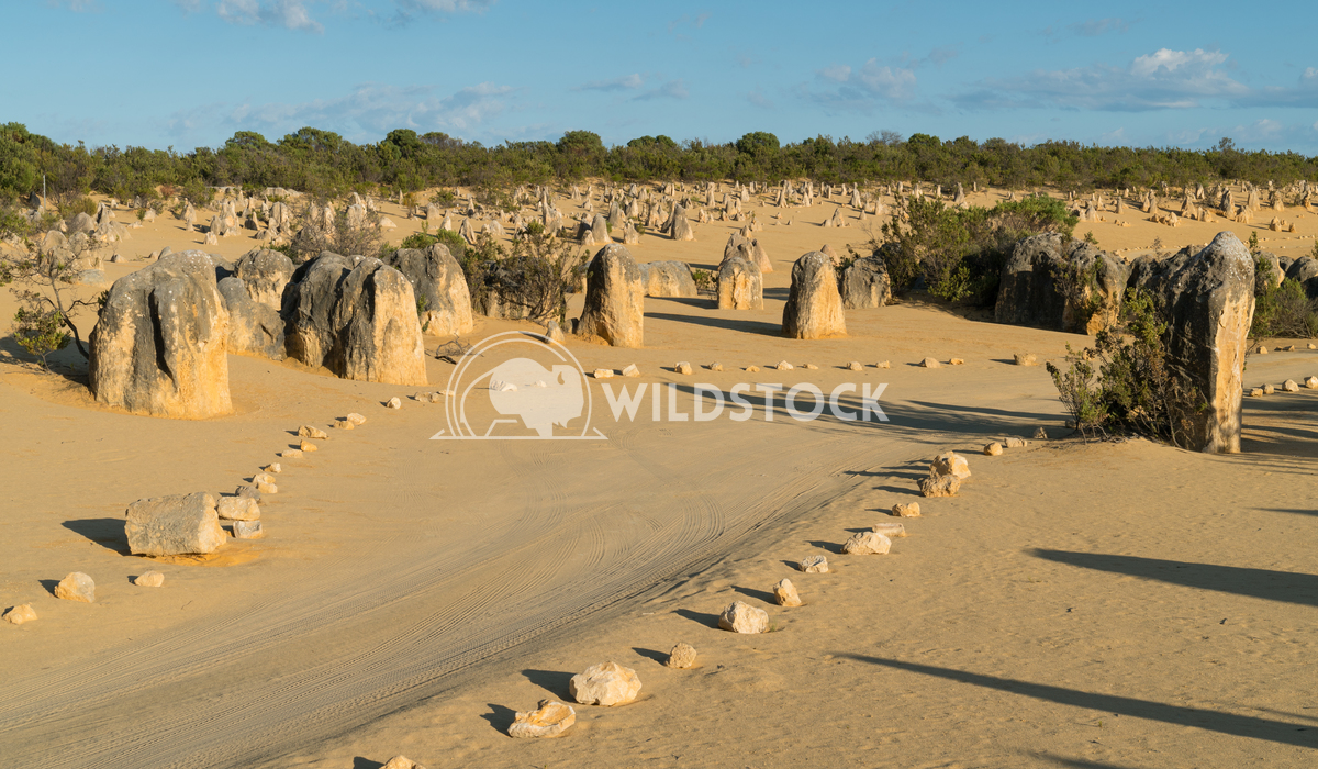 Nambung National Park, Western Australia 19 Alexander Ludwig Pinnacles Desert in early morning light, Nambung National P