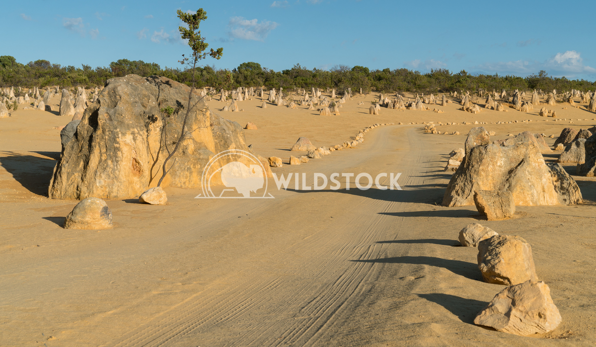 Nambung National Park, Western Australia 20 Alexander Ludwig Pinnacles Desert in early morning light, Nambung National P
