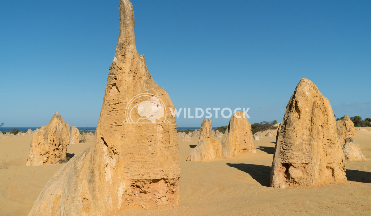 Nambung National Park, Western Australia 23 Alexander Ludwig Pinnacles Desert in early morning light, Nambung National P