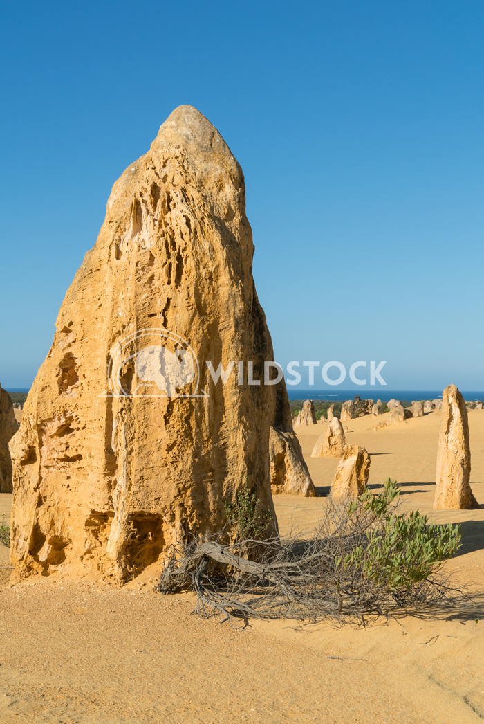 Nambung National Park, Western Australia 25 Alexander Ludwig Pinnacles Desert in early morning light, Nambung National P