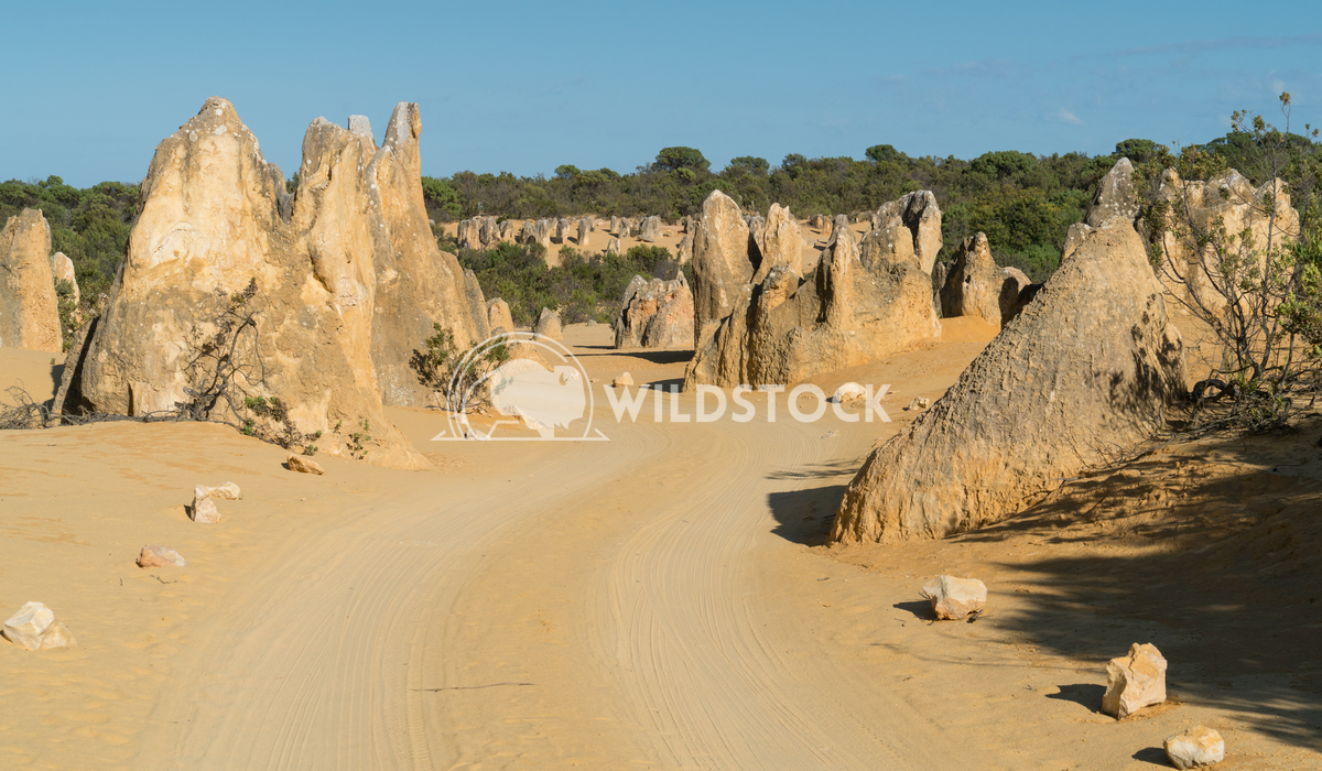 Nambung National Park, Western Australia 26 Alexander Ludwig Pinnacles Desert in early morning light, Nambung National P