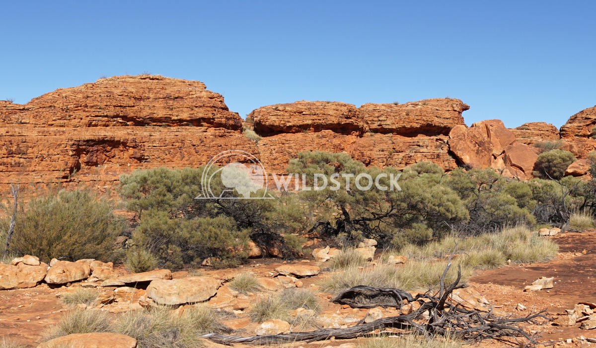 Kings Canyon, Australia 5 Alexander Ludwig Landscape of the Kings Canyon, Outback of Australia