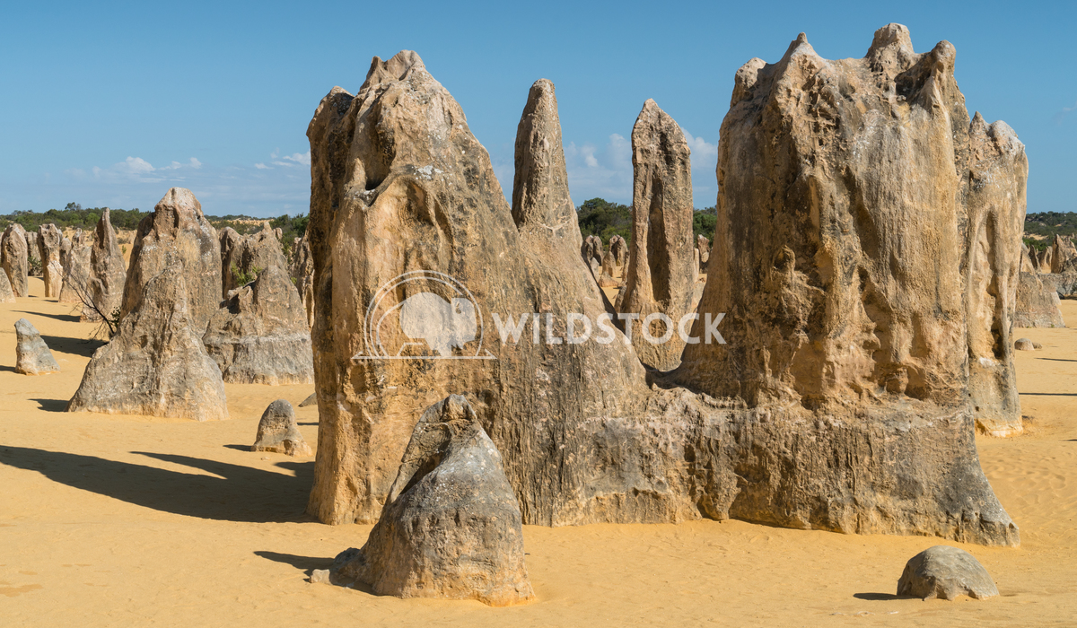 Nambung National Park, Western Australia 36 Alexander Ludwig Pinnacles Desert in early morning light, Nambung National P