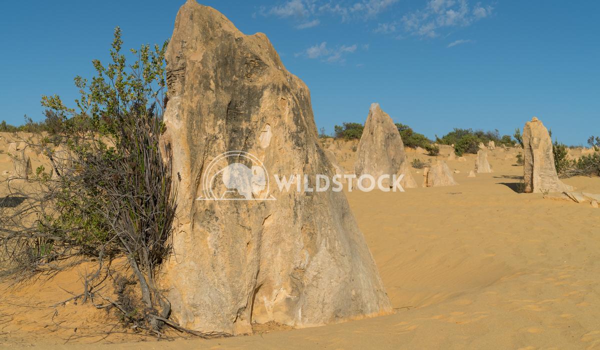 Nambung National Park, Western Australia 50 Alexander Ludwig Pinnacles Desert in early morning light, Nambung National P