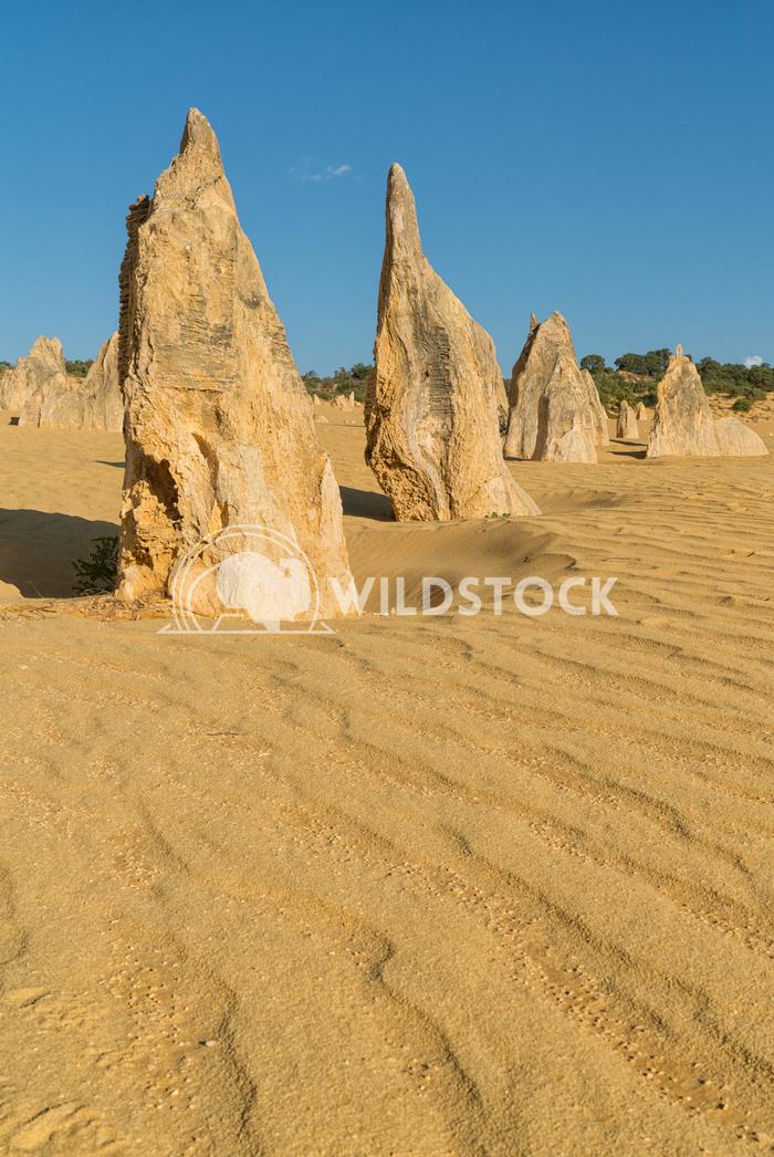 Nambung National Park, Western Australia 53 Alexander Ludwig Pinnacles Desert in early morning light, Nambung National P