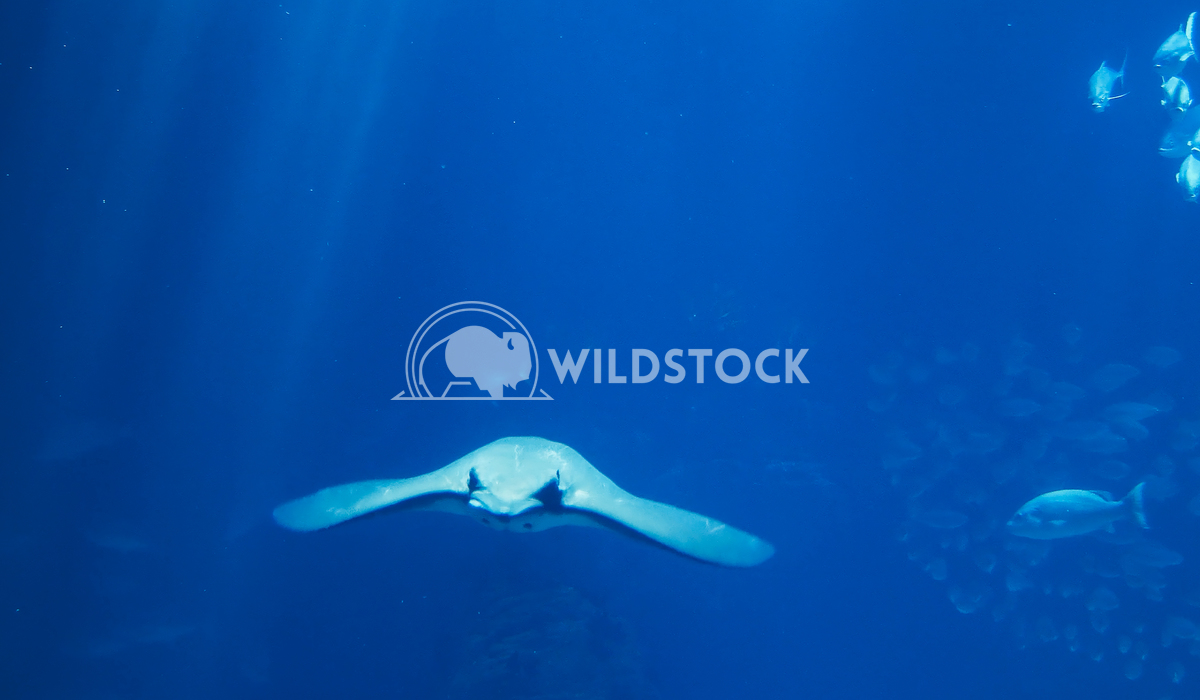 Deep Ocean Fish Swimming Radu Bercan Deep Ocean Fish Swimming