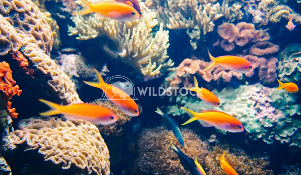 Deep Ocean Colorful Fish Swimming In Large Aquarium Radu Bercan Deep Ocean Colorful Fish Swimming In Large Aquarium