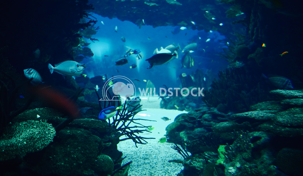 Deep Ocean Fish Swimming In Large Aquarium Radu Bercan Deep Ocean Colorful Fish Swimming In Large Aquarium