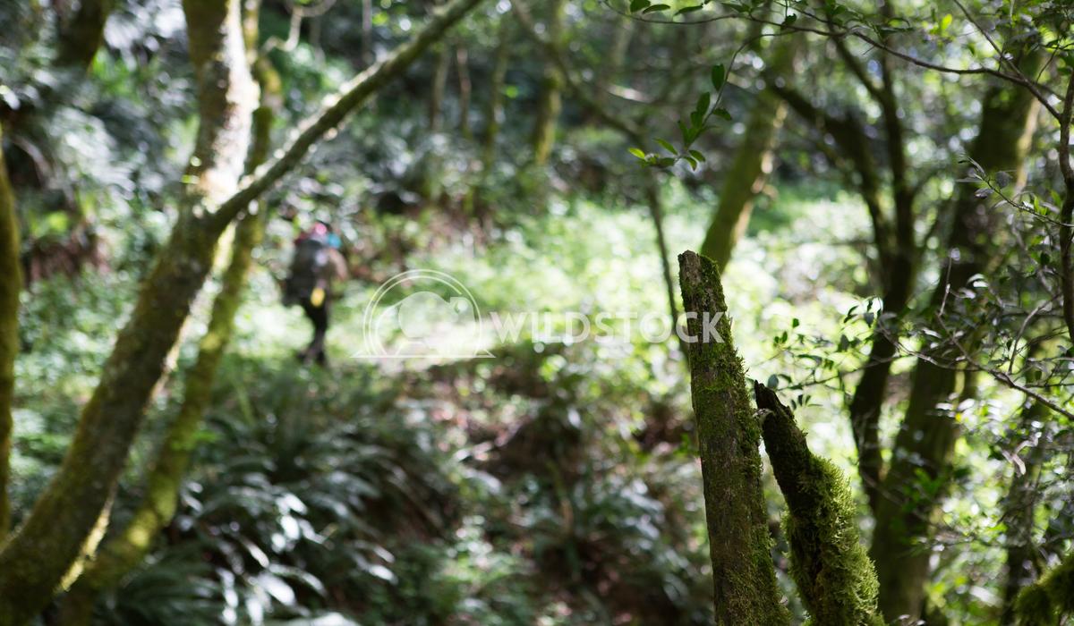 Soft Hiker Henry McCluster