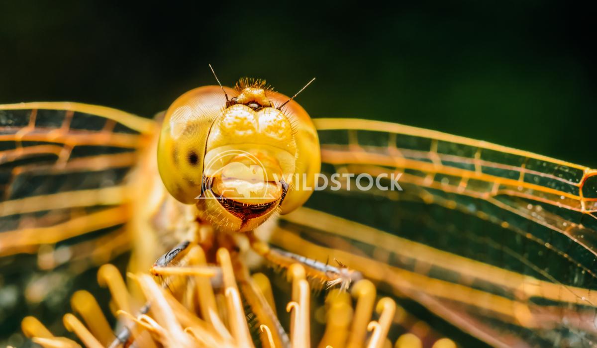 Extreme Macro Photo Of A Dragonfly Radu Bercan Extreme Macro Photo Of A Dragonfly