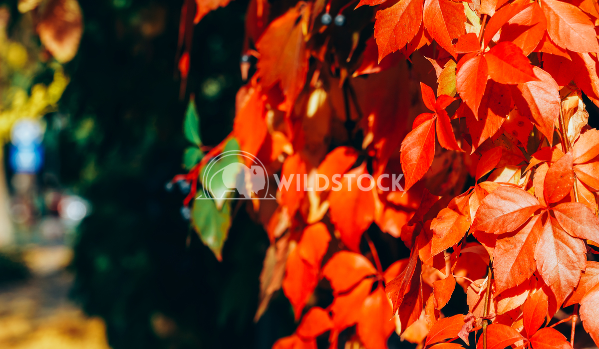 Yellow And Red Leaves On Autumn Day Radu Bercan Yellow And Red Leaves On Autumn Day