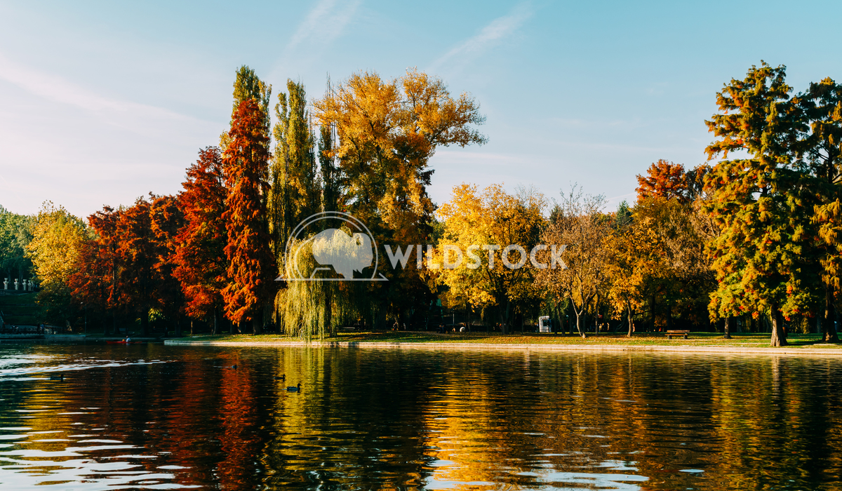 Autumn Season In Bucharest Park Landscape Radu Bercan Autumn Season In Bucharest Park Landscape