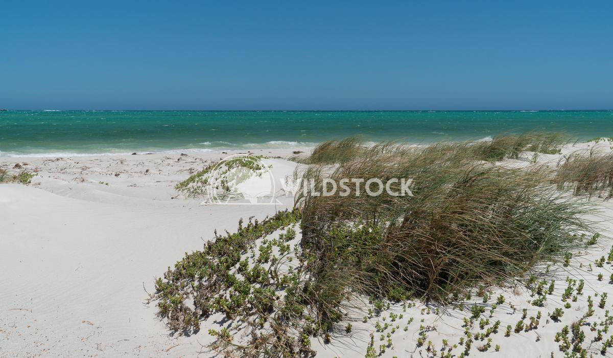 Coast, Cervantes, Western Australia 6 Alexander Ludwig Coastal landscape close to Cervantes on a stormy day, Western Aus