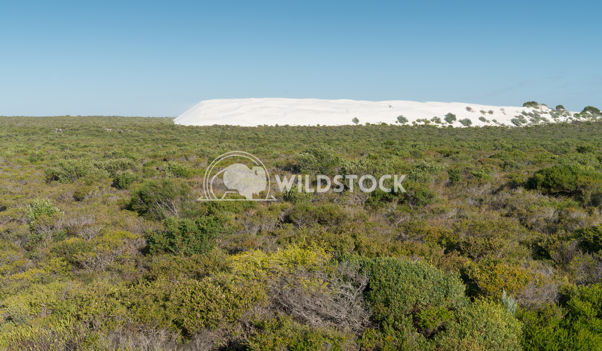 Landscape of Nambung National Park, Western Australia 1 Alexander Ludwig Landscape of the Nambung National Park, Western