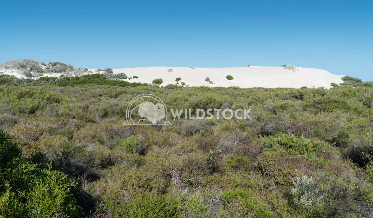 Landscape of Nambung National Park, Western Australia 2 Alexander Ludwig Landscape of the Nambung National Park, Western