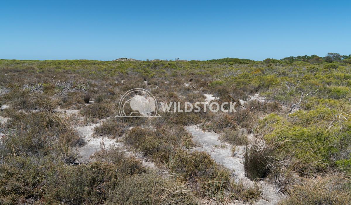 Landscape of Nambung National Park, Western Australia 3 Alexander Ludwig Landscape of the Nambung National Park, Western