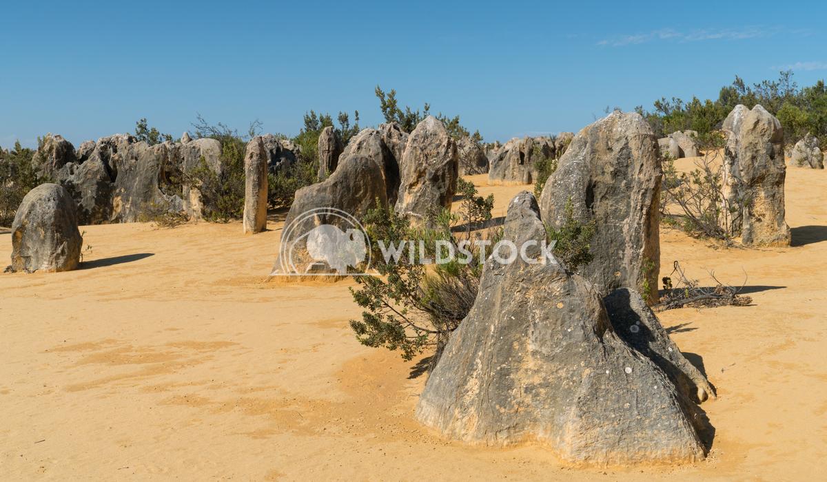 Nambung National Park, Western Australia 57 Alexander Ludwig Pinnacles Desert, Nambung National Park, Western Australia