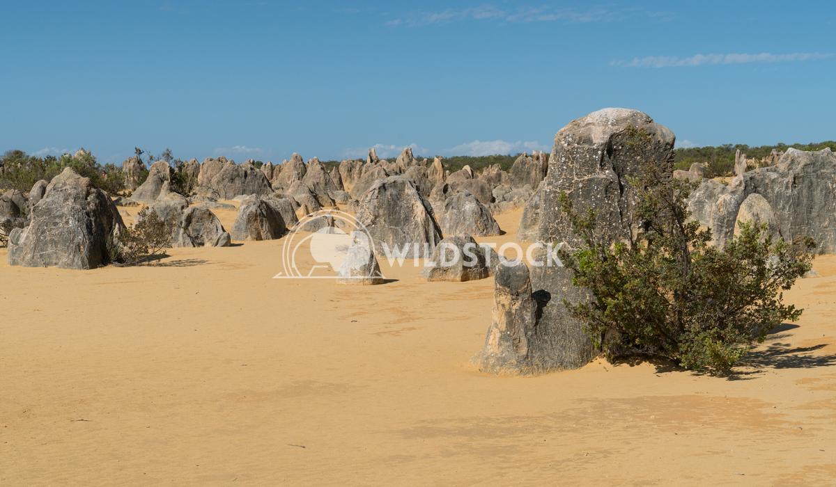 Nambung National Park, Western Australia 58 Alexander Ludwig Pinnacles Desert, Nambung National Park, Western Australia