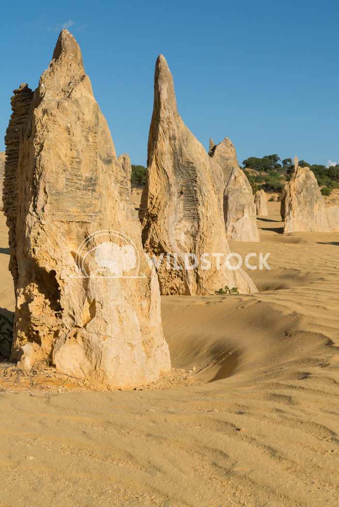 Nambung National Park, Western Australia 70a Alexander Ludwig Pinnacles Desert, Nambung National Park, Western Australia