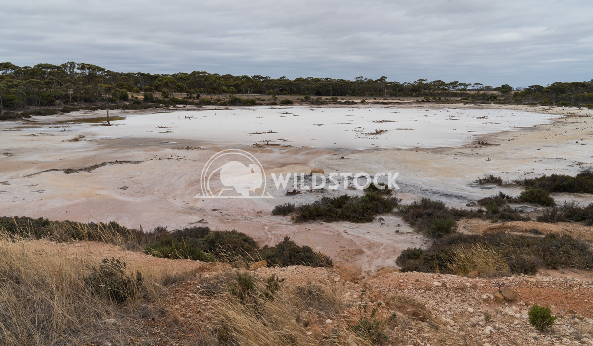 Salt lakes, Outback of Western Australia 1 Alexander Ludwig Landscape with salt lakes on an overcast day in Western Aust